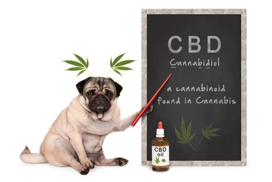 CBD Oil for Cats: How It's Different than Dogs