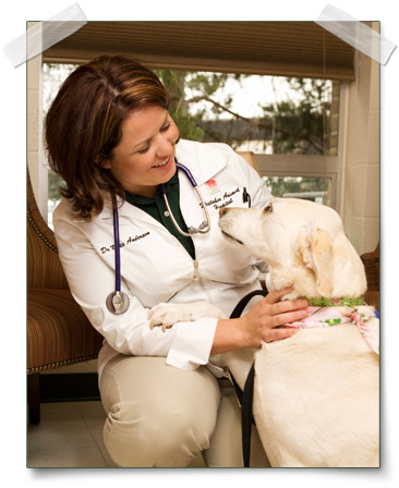 Pet Vaccines for Cats and Dogs